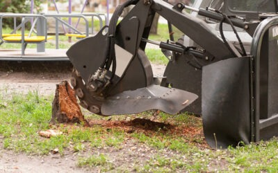 Why Tree Grinding Is Necessary For Maintenance
