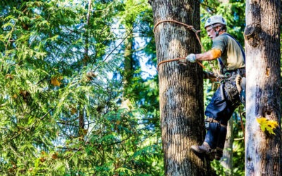 How Emergency Tree Services Can Help You