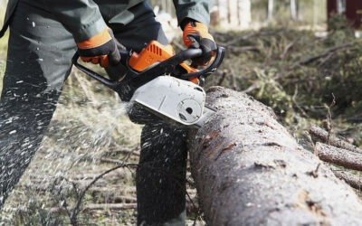Tree Removal Services – When It's Time to Hire a Professional