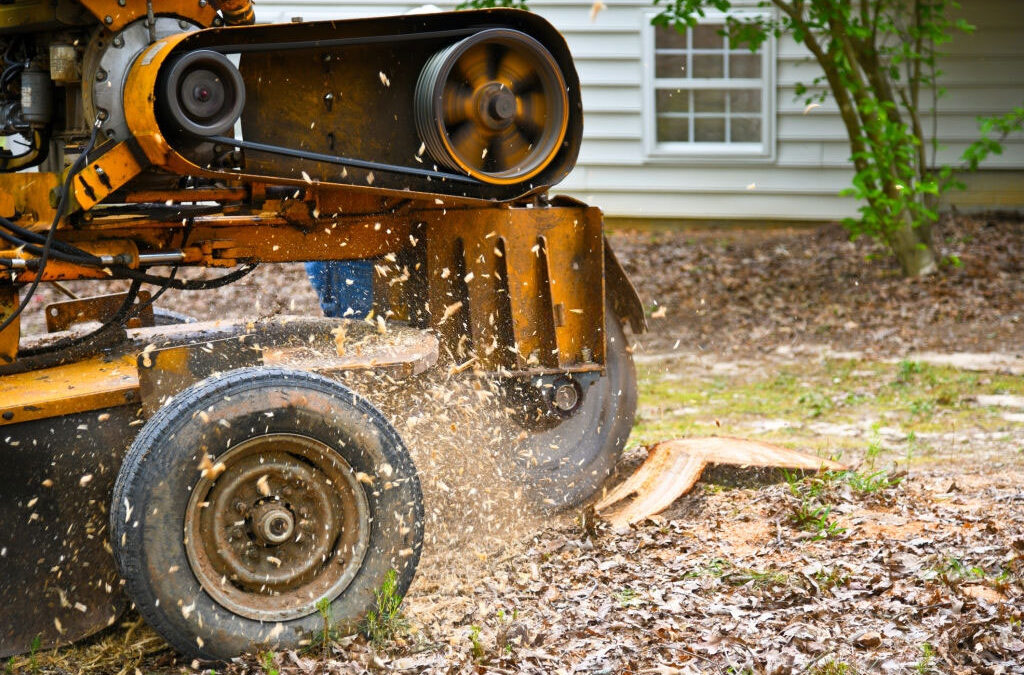 Tree Stump Removal and Grinding