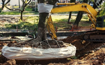 What Is a Tree Removal?