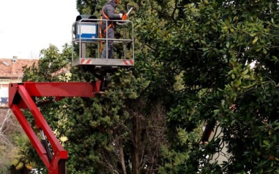 Why You Need a Tree Service Technician