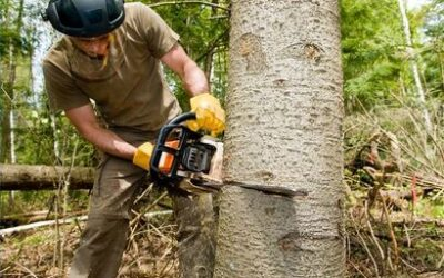 Choosing A Good Tree Service Provider
